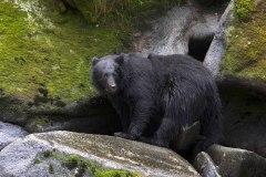K32148-I-See-You-Black-Bear