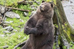 K50081A-The-Bears-Prayer